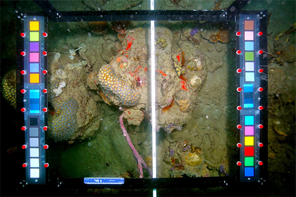 Capturing images of coral reef to be analyzed using CoralNet Beta software