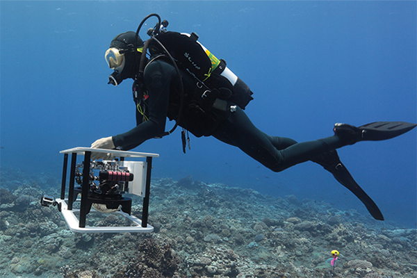 Scripps diver canvasses section of coral reef on Palmyra Atoll.